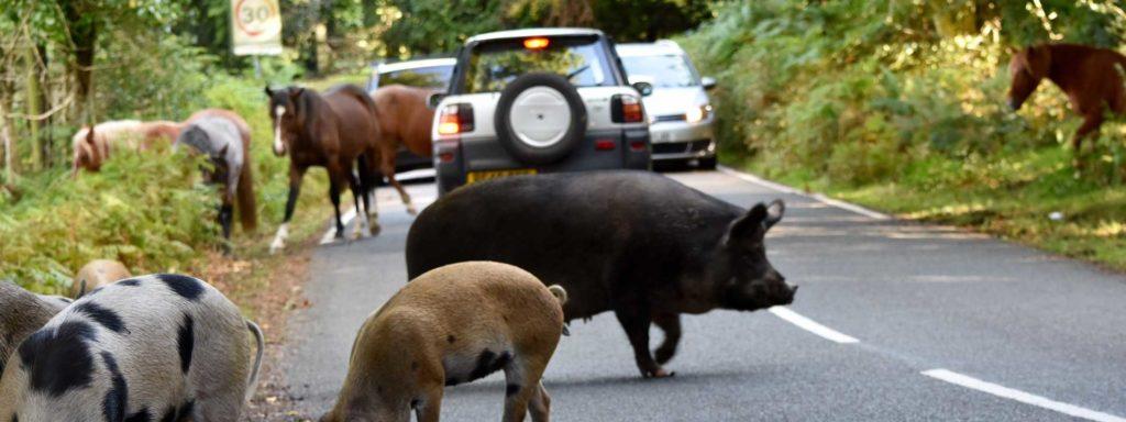 Polizza assicurazione danni animali selvatici e randagi - campersereno