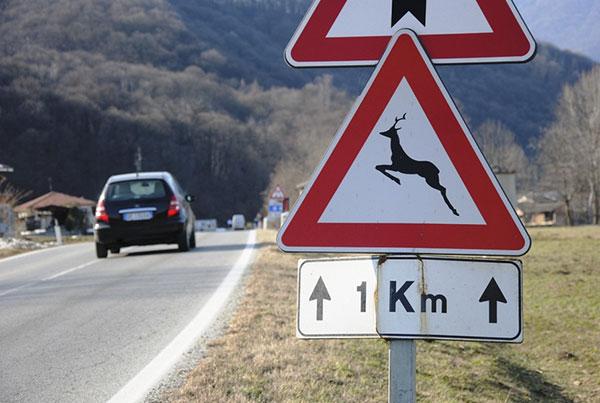 Segnaletica stradale animali selvatici - assicurazione danni - campersereno