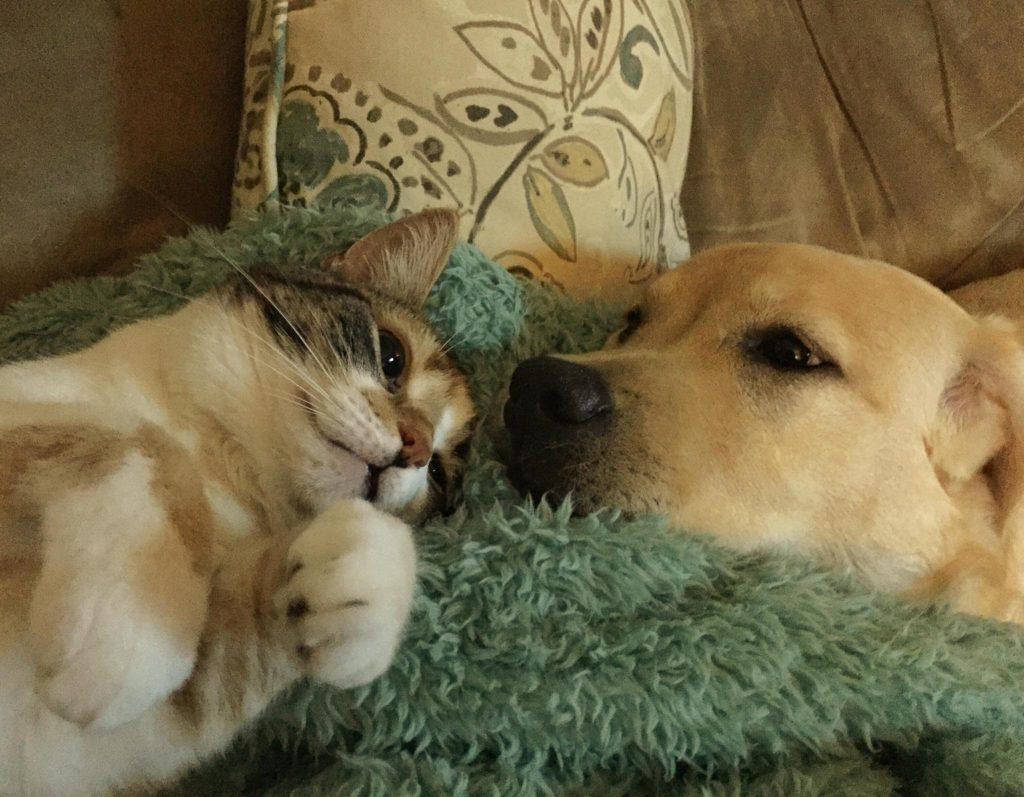 cani e gatti copertina