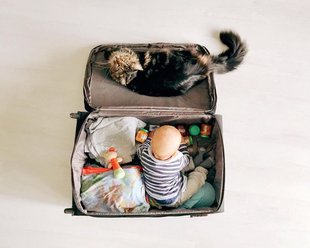 valigia per cani e gatti